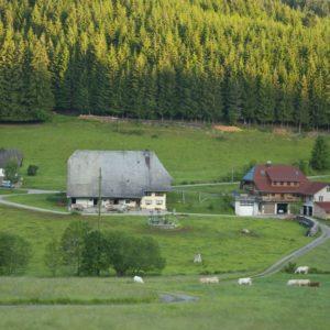 schellen-sau-tour2012-054