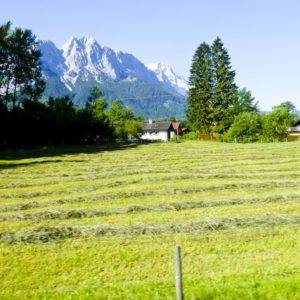 schellen-sau-tour2012-112